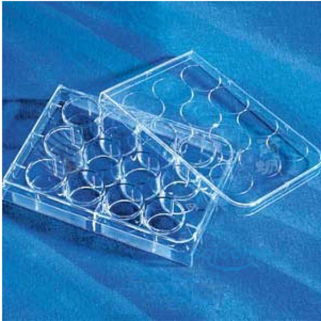 12孔细胞培养板